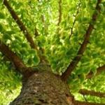 La vie rêvée des arbres